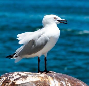 Eine Möwe gehört zur Klangkulisse am Meer