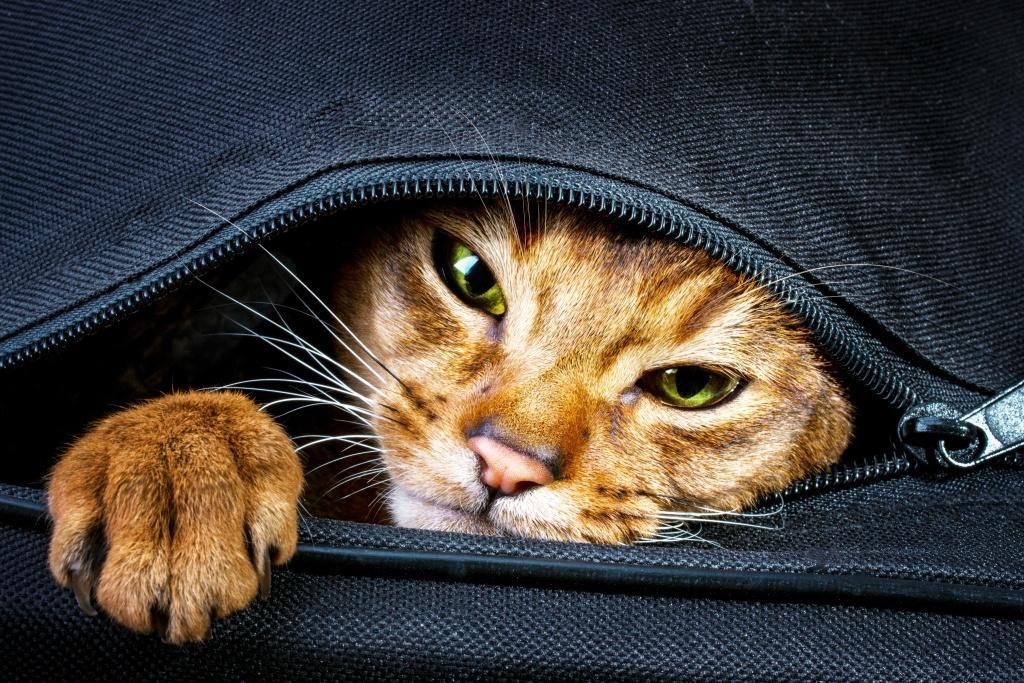 Keine Ablenkungen bei einer Schreibblockade! Und wenn die Katze noch so süß ist.